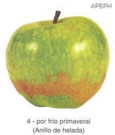 Anillo de helada en manzana