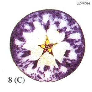 Test almidon fruta pepita tipo circular estado 08