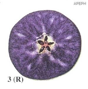 Test almidon fruta pepita tipo radial estado 03