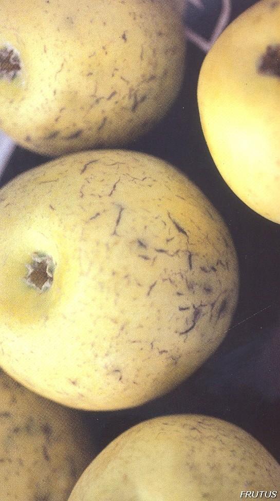 Agrietado en Manzana
