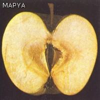 Pardeamiento interno - Manzana