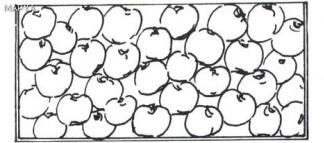 Distribucion de fruta de pepita en cajas