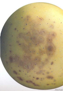Escaldado Lenticelar Manzana Pera