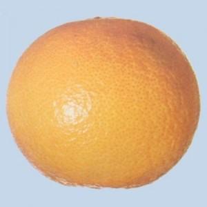 Cochinilla en naranja navel - Extra