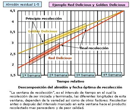 Descomposición del almidon y fecha optima de recoleccion en golden delicious
