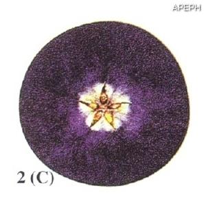 Test almidon fruta pepita tipo circular estado 02