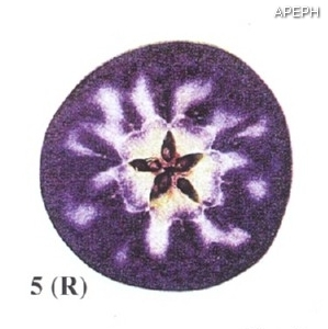 Test almidon fruta pepita tipo radial estado 05