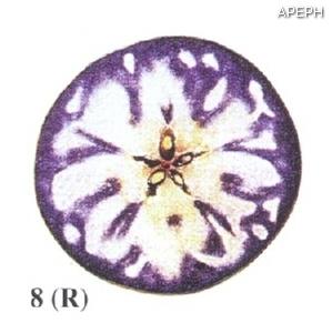 Test almidon fruta pepita tipo radial estado 08