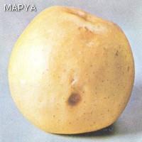 Manzana con podredumbre