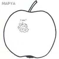Manzana defectos en la epidermis 03