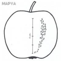 Manzana defectos en la epidermis 02