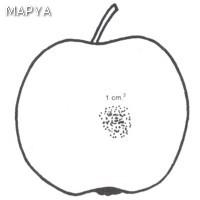 Manzana defectos en la epidermis 06