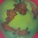 Moteado en manzana - Venturia inaequalis