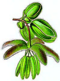 Flor masculina de Cannabis