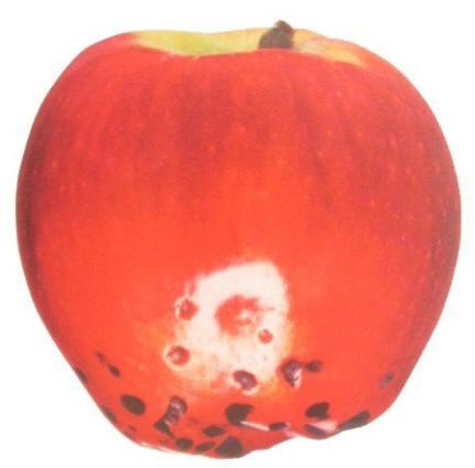 Plara en manzana y fruta de pepita